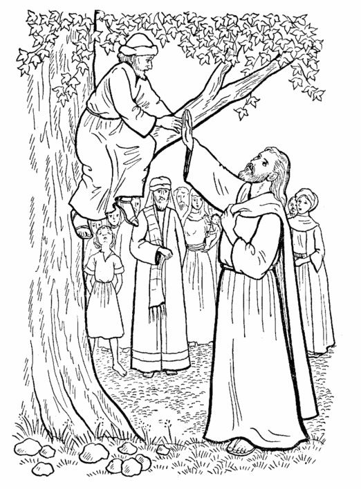 Dibujo para pintar sobre Zaqueo Zaqueo Pinterest - copy coloring pages for zacchaeus