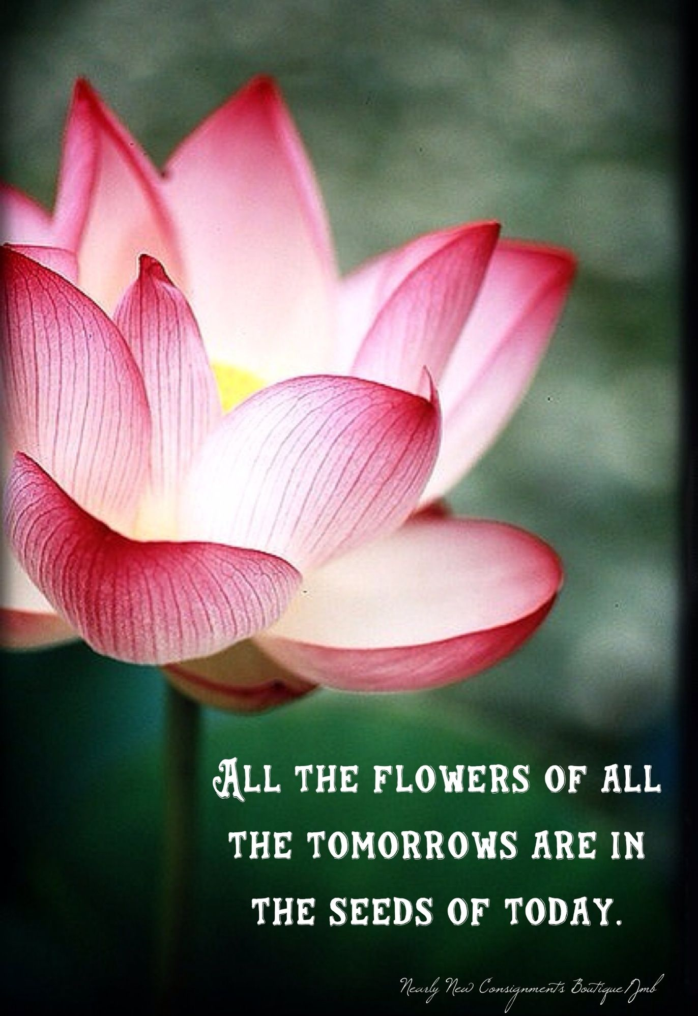 Live Embrace Life Inspirational Beautiful Flower All The