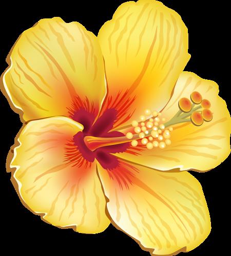 Flowers flower clipart hibiscus - Dessin hibiscus ...