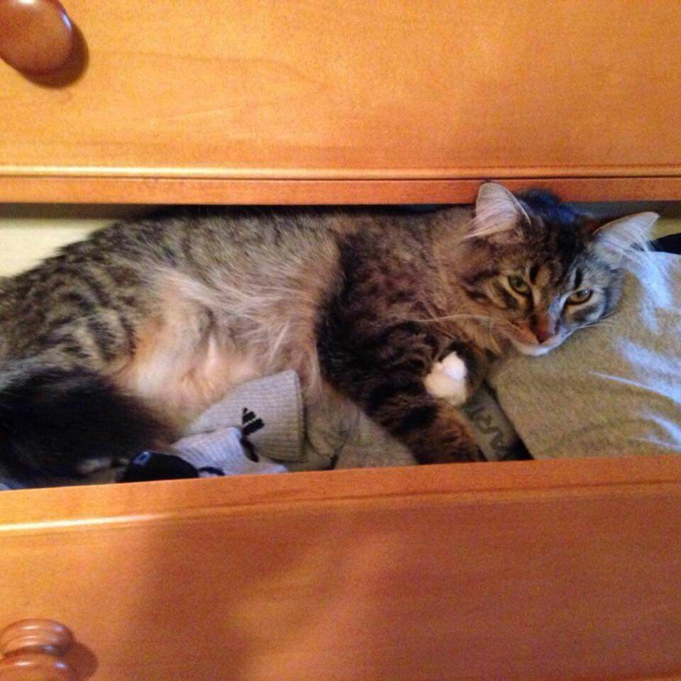 Kitty in drawer. TY Elaine