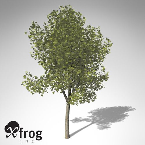 XfrogPlants Ohio Buckeye – free 3D model ready for CG projects. Available formats: Maya (.ma, .mb), Other, Cinema 4D (.c4d), Alias/WaveFront Material (.mtl), 3D Studio (.3ds), 3D Studio Max (.max), Lightwave (.lwo, .lw, .lws)