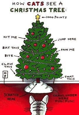 How Cats See A Christmas Tree Cat Christmas Tree Christmas Cats Crazy Cats