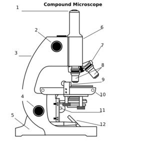 Compound Microscope Clip Art Microscopic Microscope Science Tools