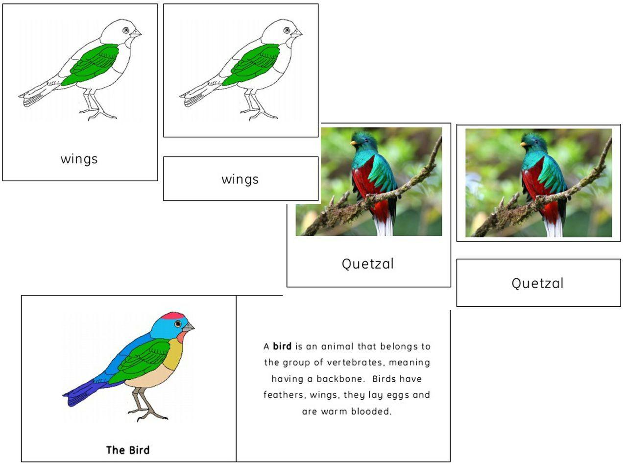 The Bird Pack