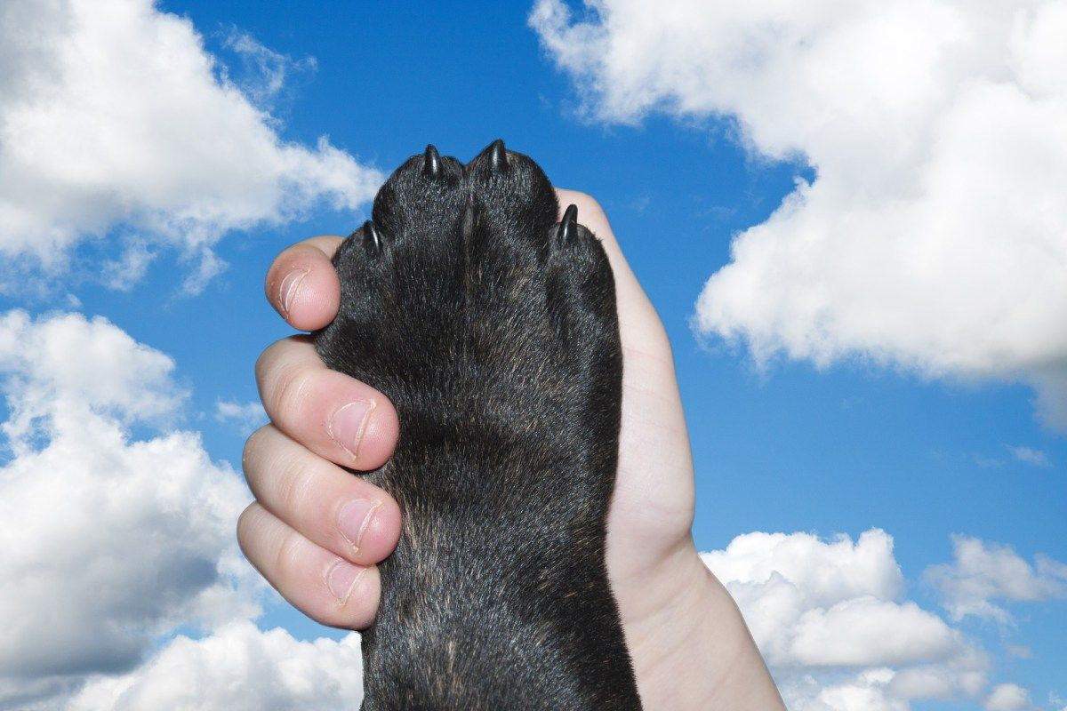 Assistenzhunde Im Magazin Wuff Hund Nagel Hunde Und Hundegesundheit