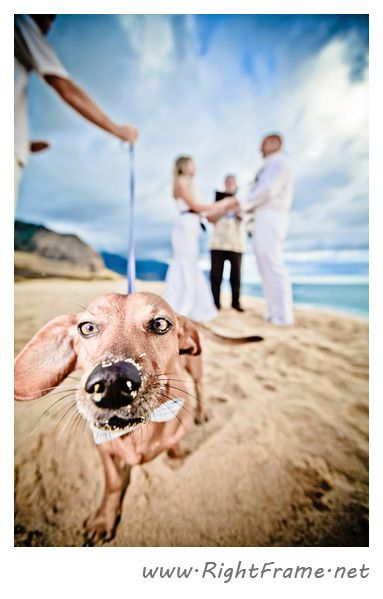 www.rightframe.net - Beautiful Destination wedding at Yokohama  Beach, Oahu. photography, photographer, weddings, photos, bride , groom, hawaiian, romantic, ideas, dog, couple, bouquets, ceremony, lei.