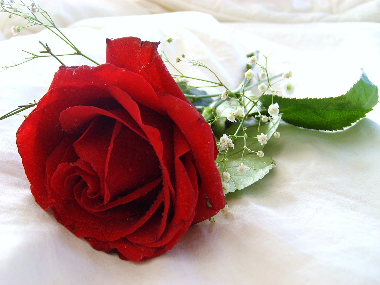 Red rose flower wallpaper beautiful flowers 2380 full hd - Red rose flower hd images ...