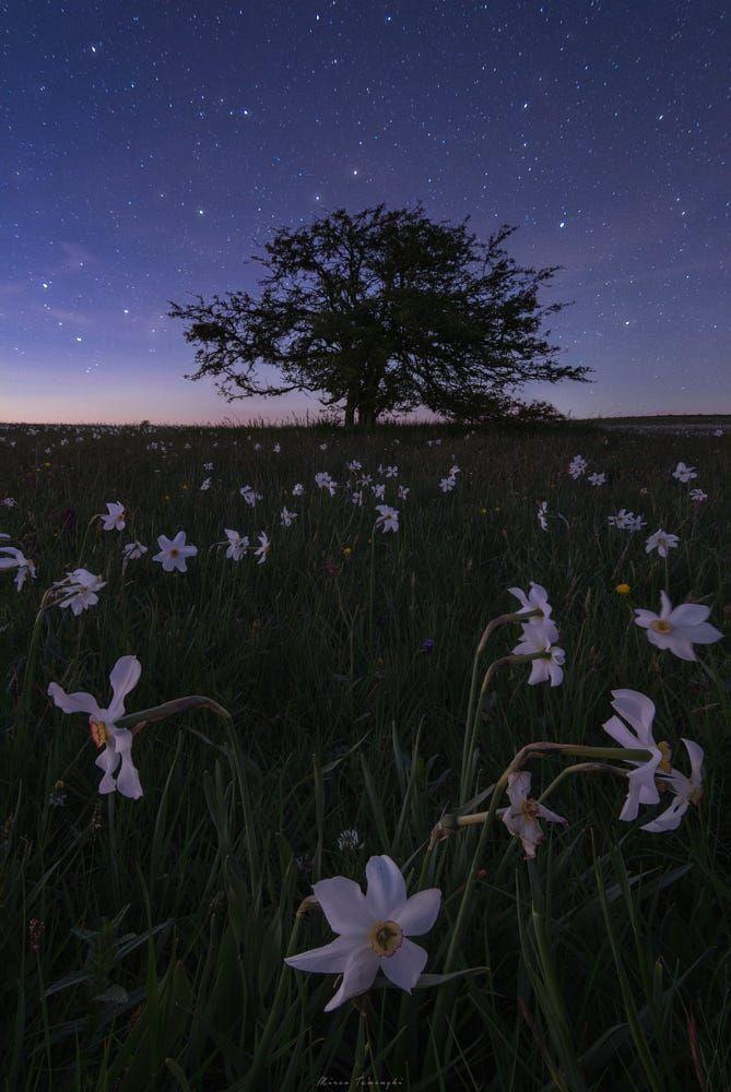 Ad Astra By Mirco Tamenghi Trees Sky Flowers Beauty Flower Blue Night Light Tree Beautiful Night Landscape Scenery Wallpaper Fantasy Landscape