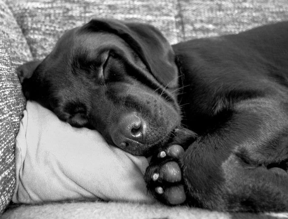 Leaving a Puppy Alone During the Day (5 Essential Tips