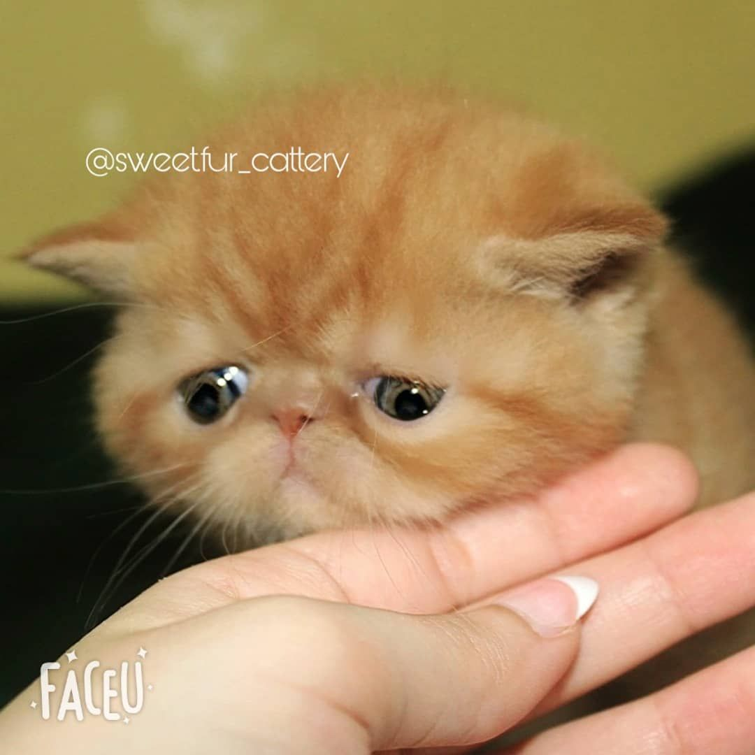 Pin On Babycat
