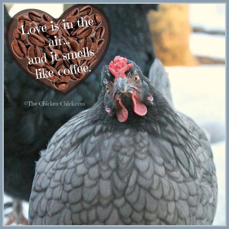 Chicken | Chicken humor, Pet chickens, Chickens backyard