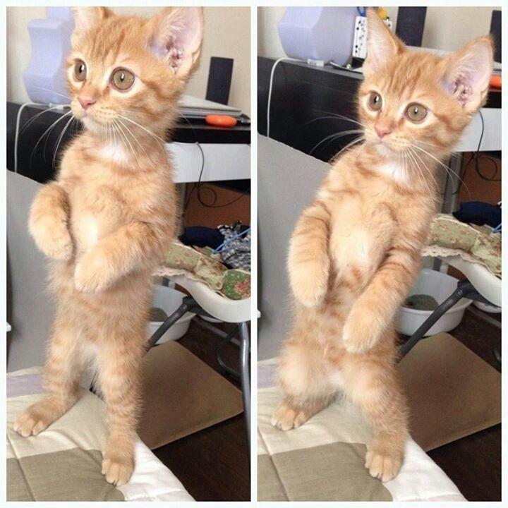 see...i told u i could dance...