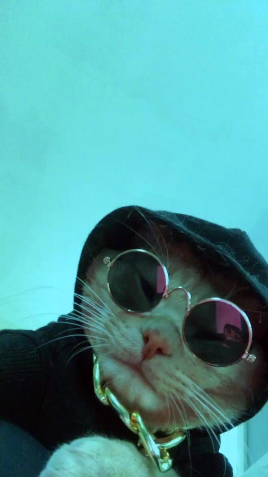 Peep Peepdacat On Tiktok Sup Fyp In 2020 Cute Cat Memes Cute Animal Photos Cute Animal Memes