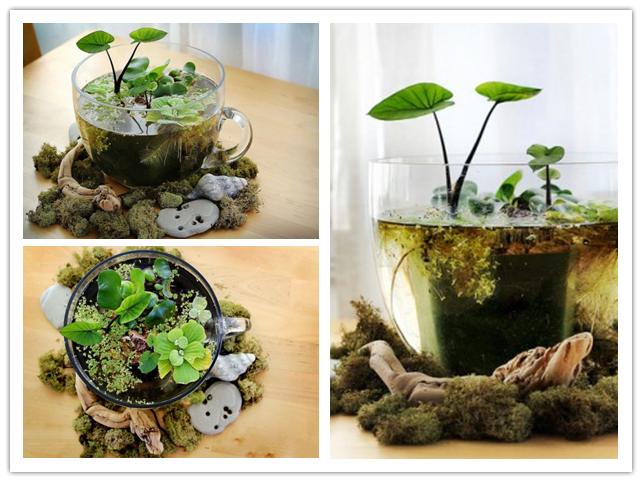How to make cute office desktop water garden step by step DIY