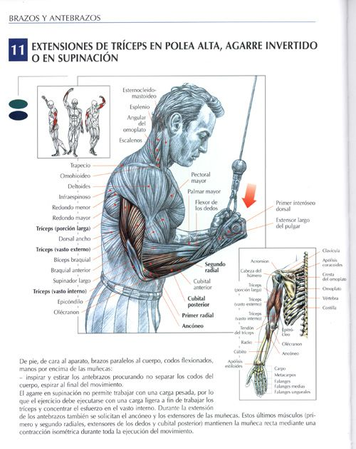 Biceps with high pulley... | Muscles | Pinterest | Fitness ...