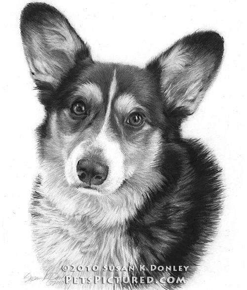 Guiness Welsh Corgi Looks Like Maxie Z Corgi Drawing Corgi Art Dog Sketch