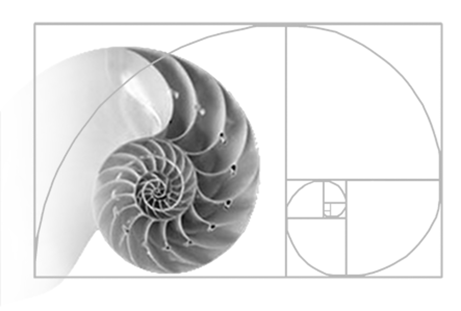 Golden Ratio Golden Spiral Fibonacci Sequence And Nature All Together Golden Ratio In Nature Golden Ratio Spirals In Nature