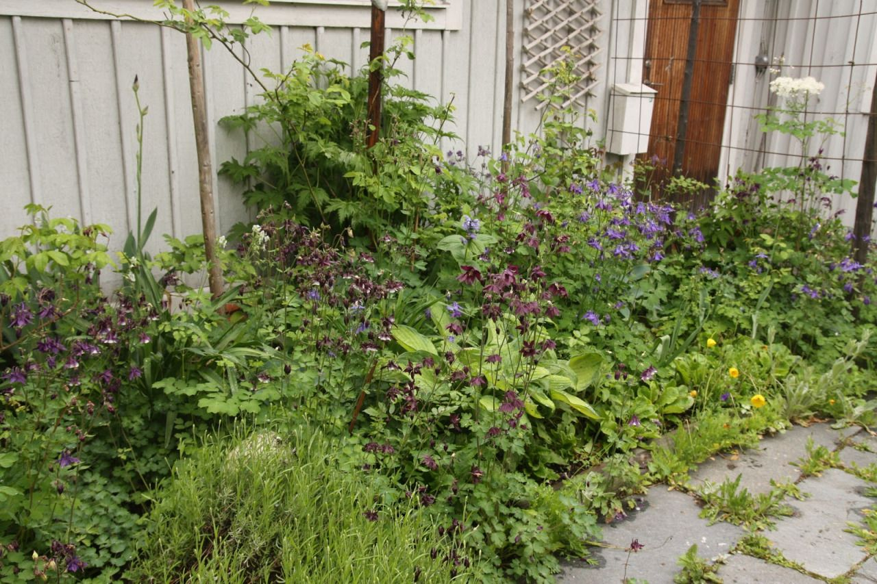 Private Garden Near Stockholm / Photos by Inger. More on Kärleksstigen. / s i m i l a r: Ulrika Linde's garden / Signe's private garden / Vegetable gardening by CHERVIL AB