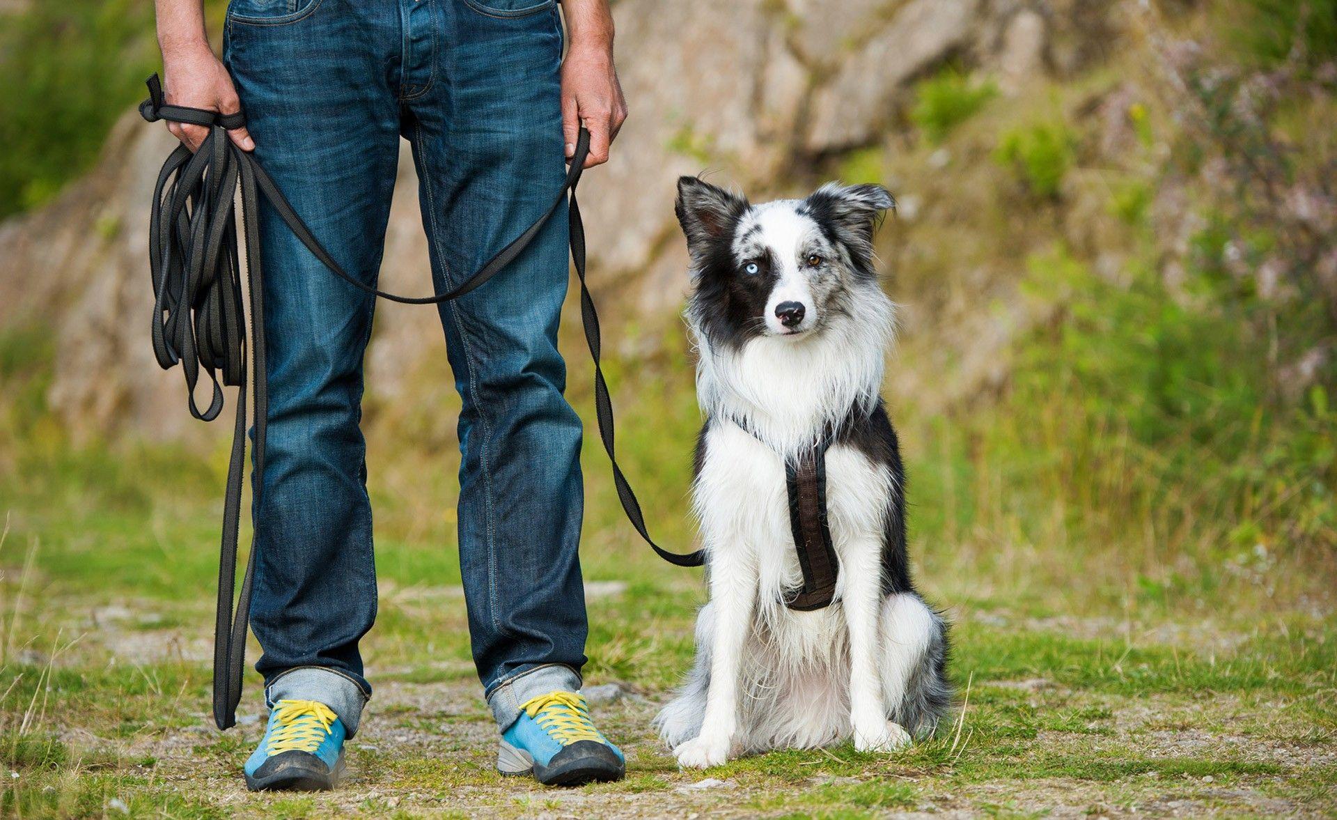 Hilfsmittel: Training mit der Schleppleine