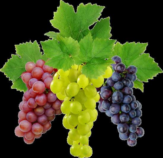 Grapes Vine Fruit Grapes Fruit