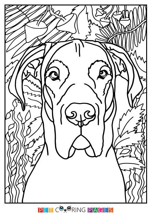 Great Dane Coloring Page   Art   Pinterest   Moose