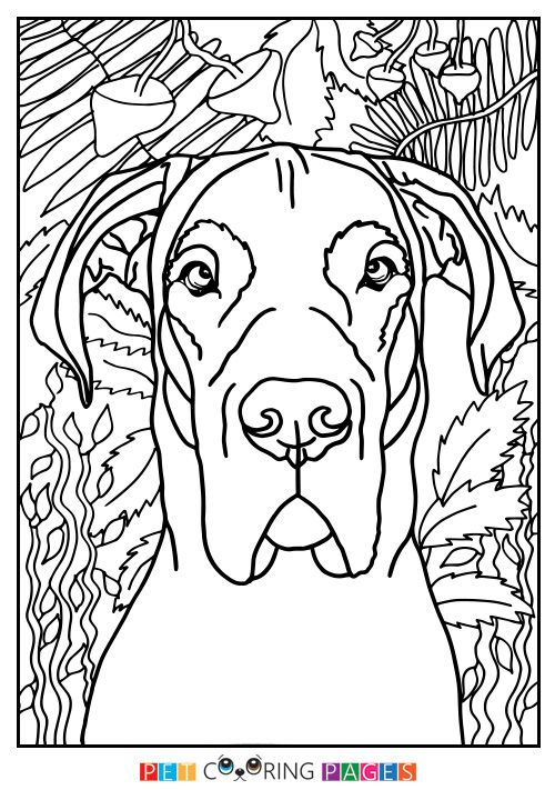 Great Dane Coloring Page Moose With Images Great Dane