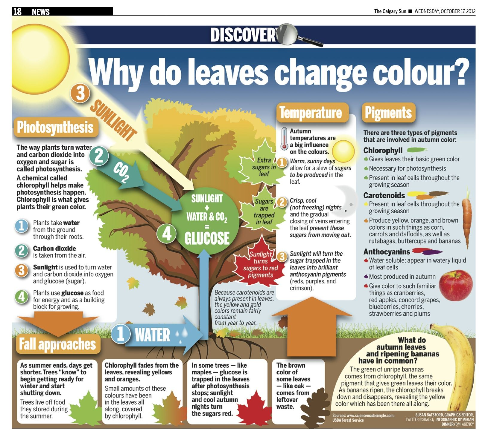 Why Do Leaves Change Colour Infographic Fall Leaves