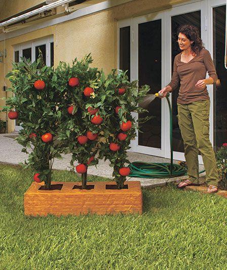 Great $5.95 Tomato Garden Box At Lakeside