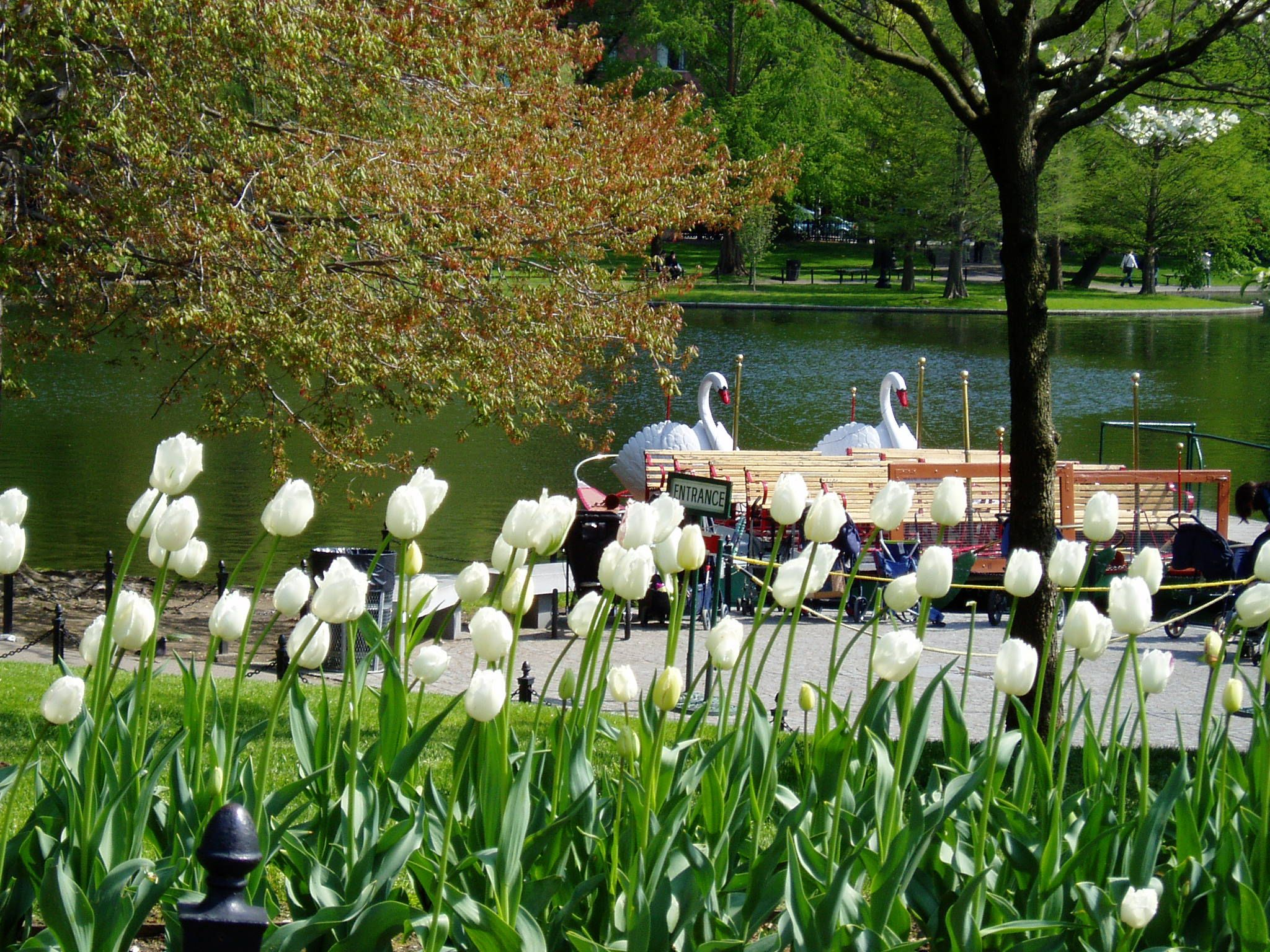Elegant Gardening Tips for Beginners