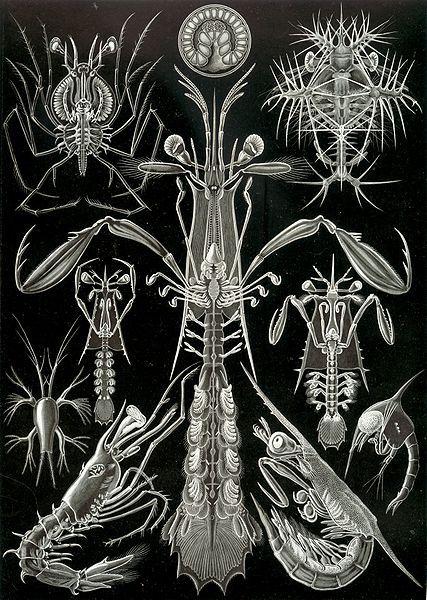 76 Kunstformen der Natur (1904),