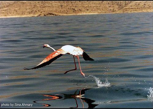 Urmu Gölü-lake urmia-اورمو گولو-دریاچه ارومیه-اورمیه-Urmiye-Orumiyeh