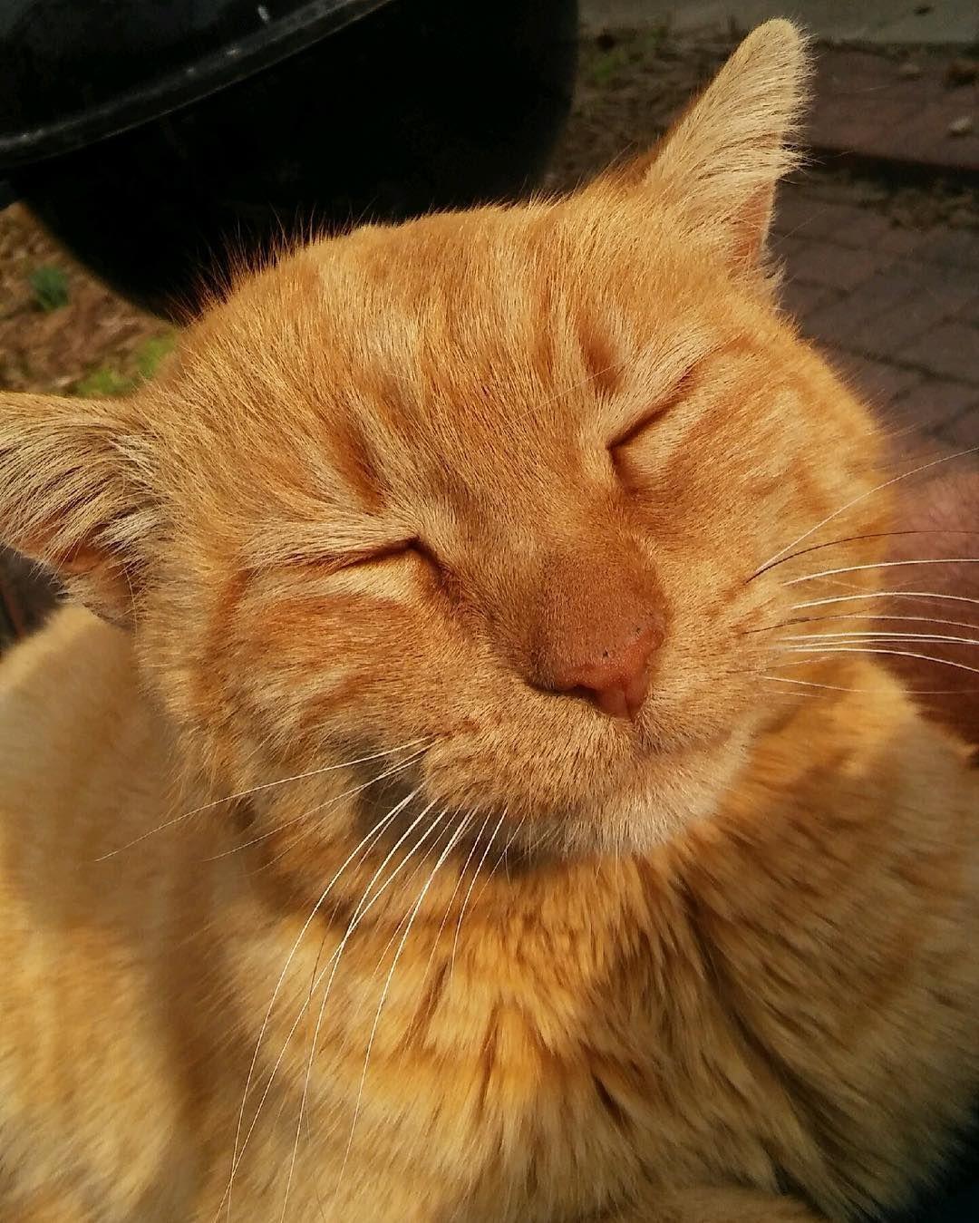 Tell me I'm a pretty kitty . . . prettykitty sunbathe