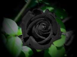 black..
