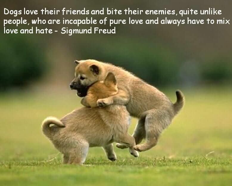 The Empath S Guide Why Is A Dog Happy And You Are Not They Want To Play If You Let Them They Want To Perform I Dog Quotes Famous Dogs Funny Animal