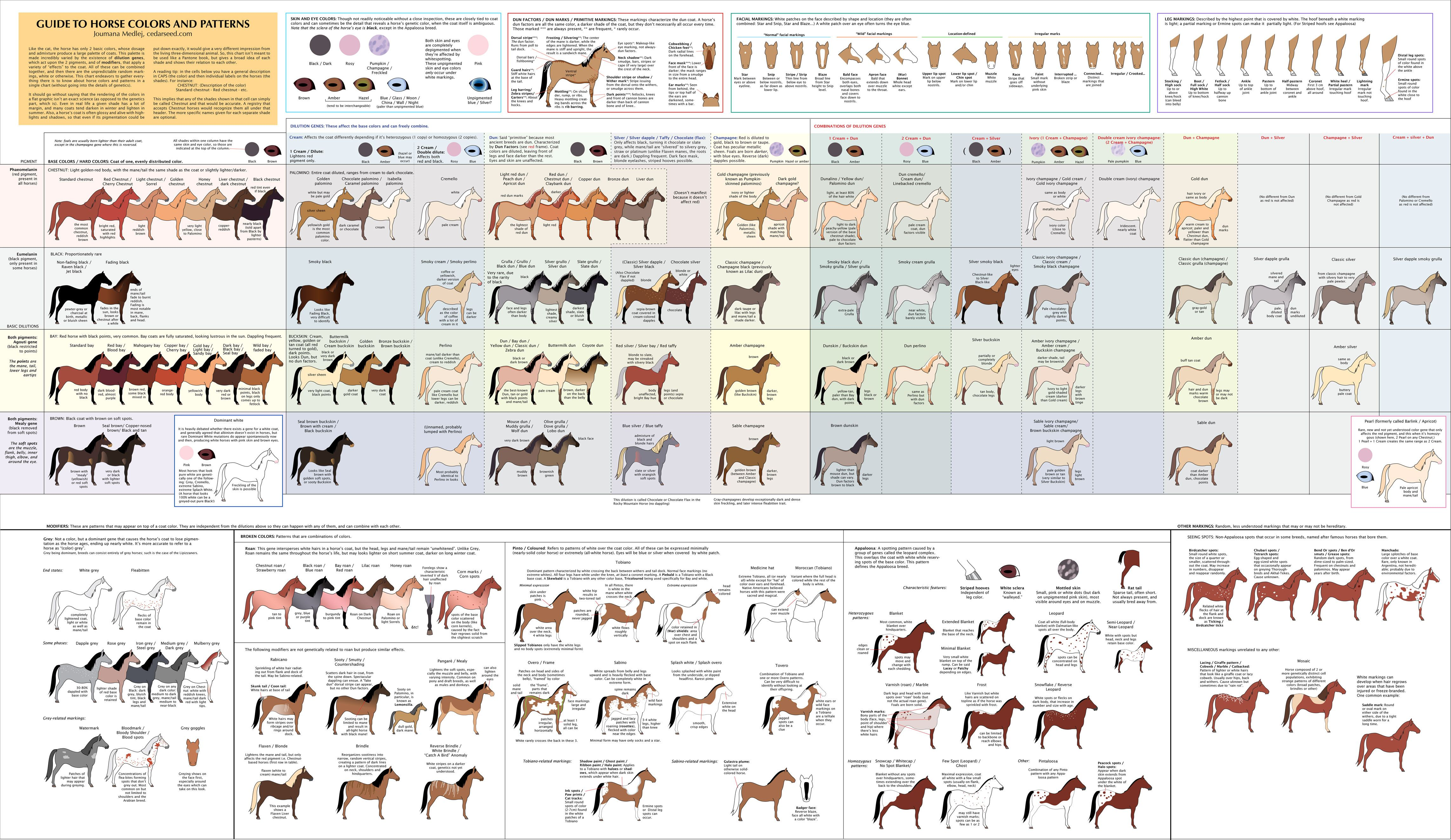 Horse color chart available for sale also horses pinterest rh
