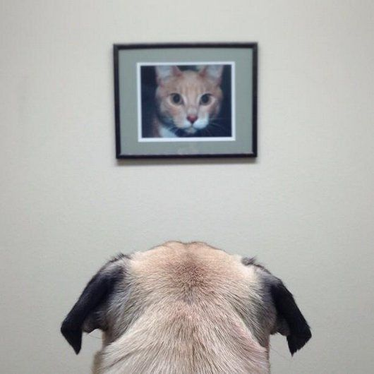funny, funny dogs, dog, cute, pug, photography, art, cool, Meet Norm, the Photogenic Pug Who Loves the Camera