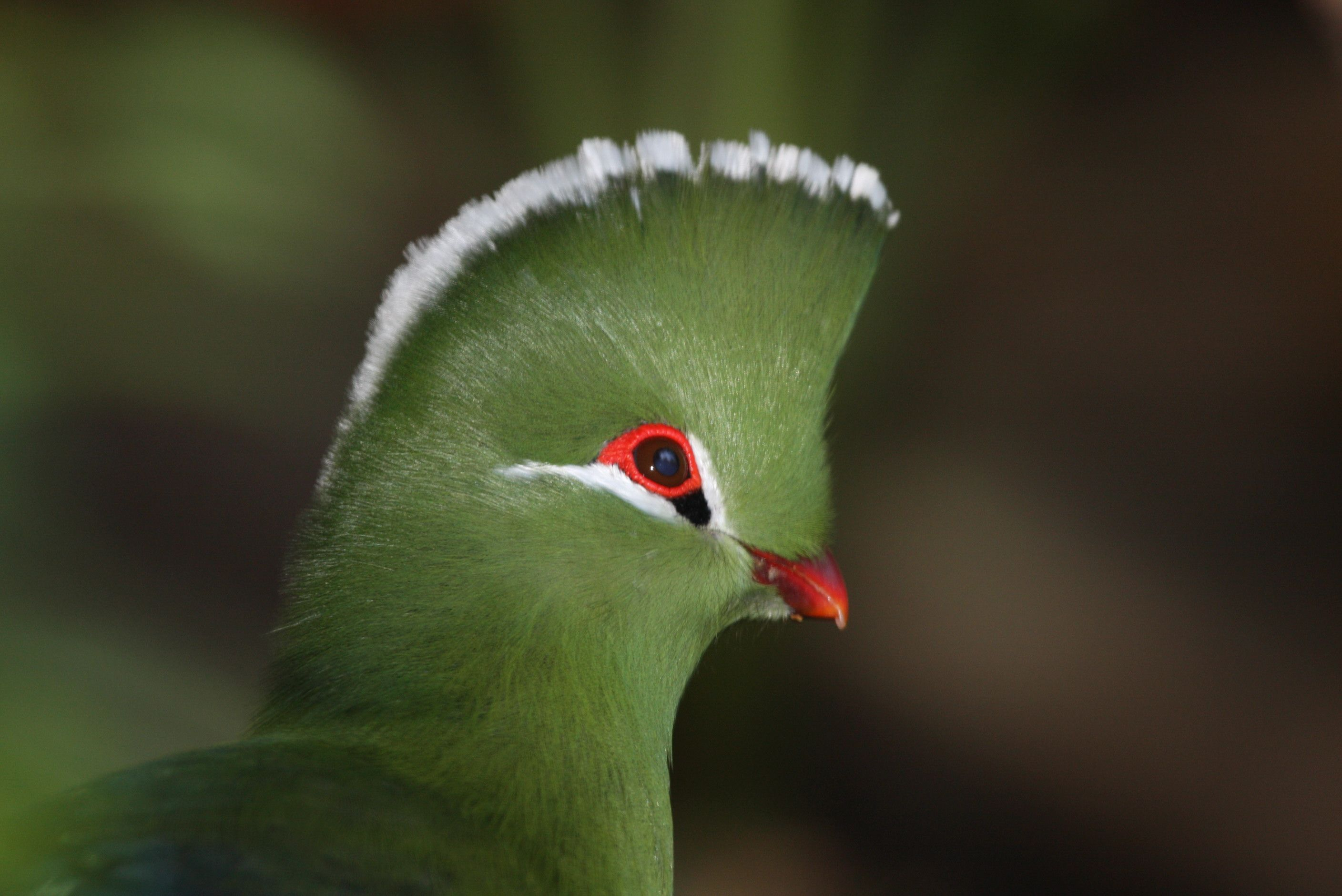 the most birds of the world Google Search