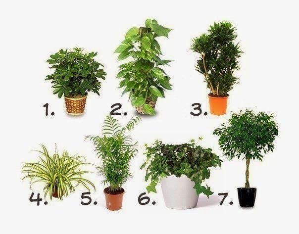 Новости интеллектуального развития: Лунный календарь на февраль для комнатных растений