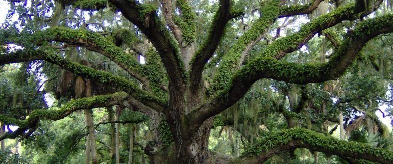 Washington Oaks Gardens State Park Palm Coast