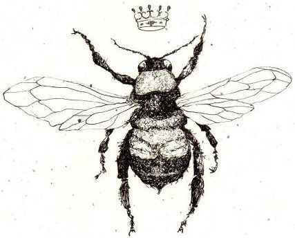 Queen Bee Scientific Drawing | www.pixshark.com - Images ...