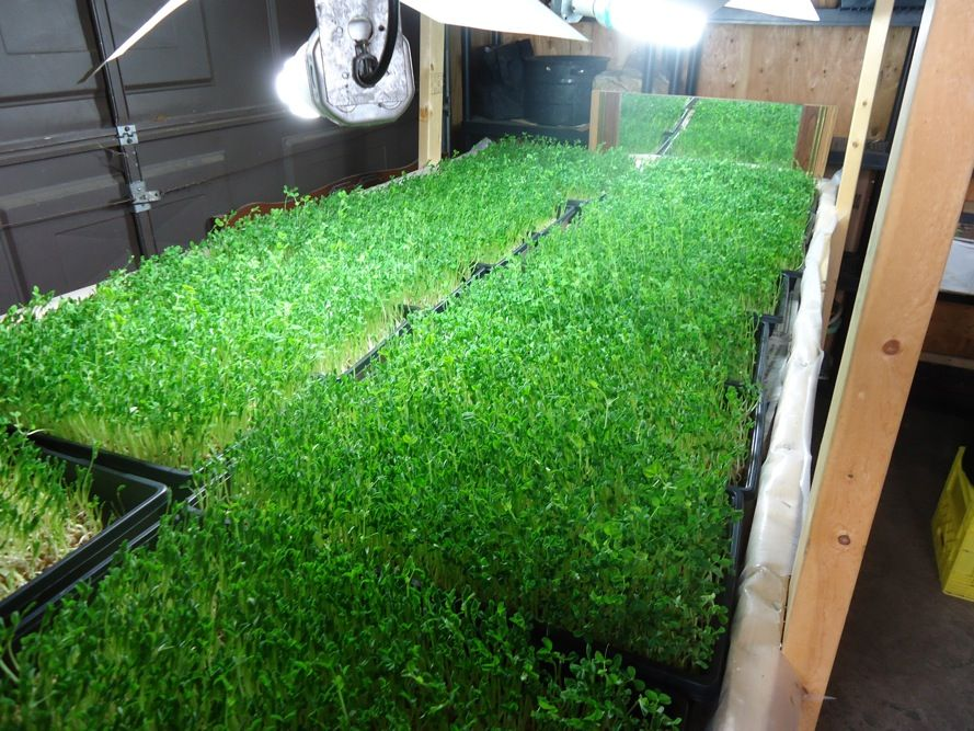 Take your farm to the next level the basement