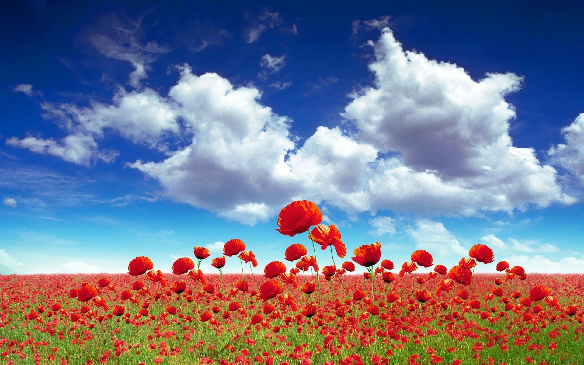 Field Of Flowers Hd Wallpaper Wallpapers Backgrounds Images Art Photos Field Wallpaper Beautiful Flowers Wallpapers Poppy Wallpaper
