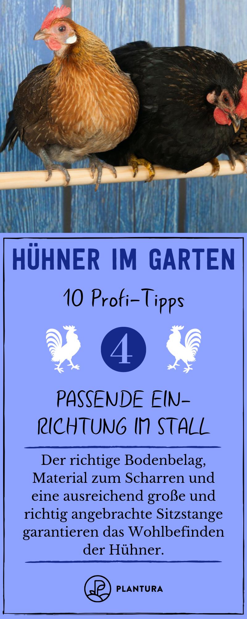 Hühner im Garten: 10 Profi-Tipps zur richtigen Haltung - Plantura #gartenideen