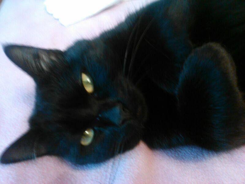 Esta gata, es Maga. Ha sido tiroteada esta mañana, supuestamente por un vecino suyo. El hecho ha sido denunciado,por los demás vecinos.