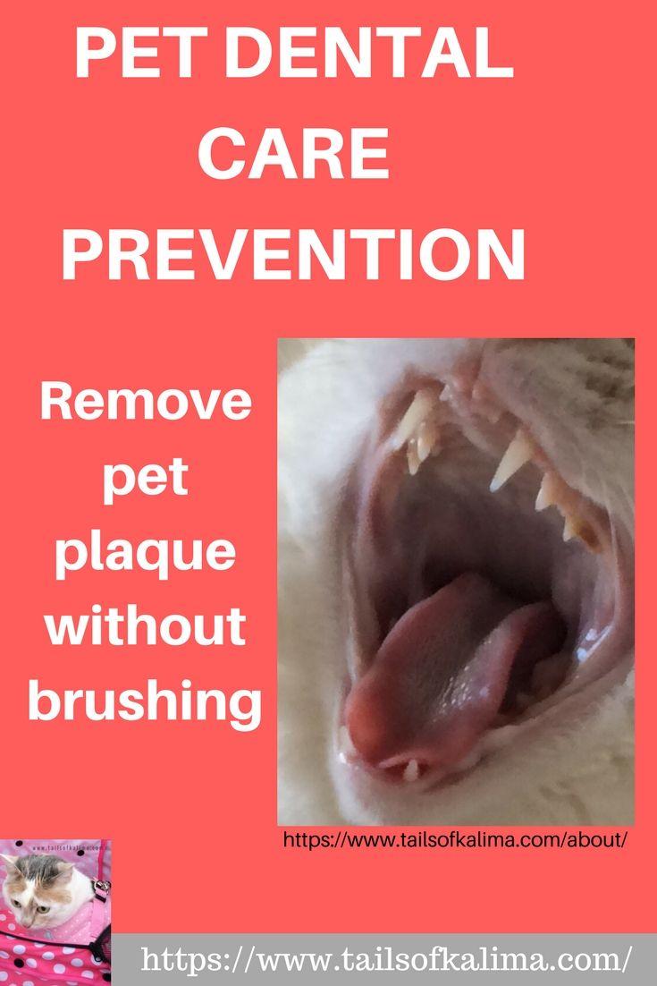 Cat dental care no more brushing kitten care dental