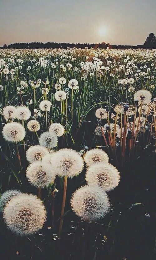 'Wishing On Dandelions All of the Time Praying to God That One Day You'll Be Mine' Ruth B. - Dandelions