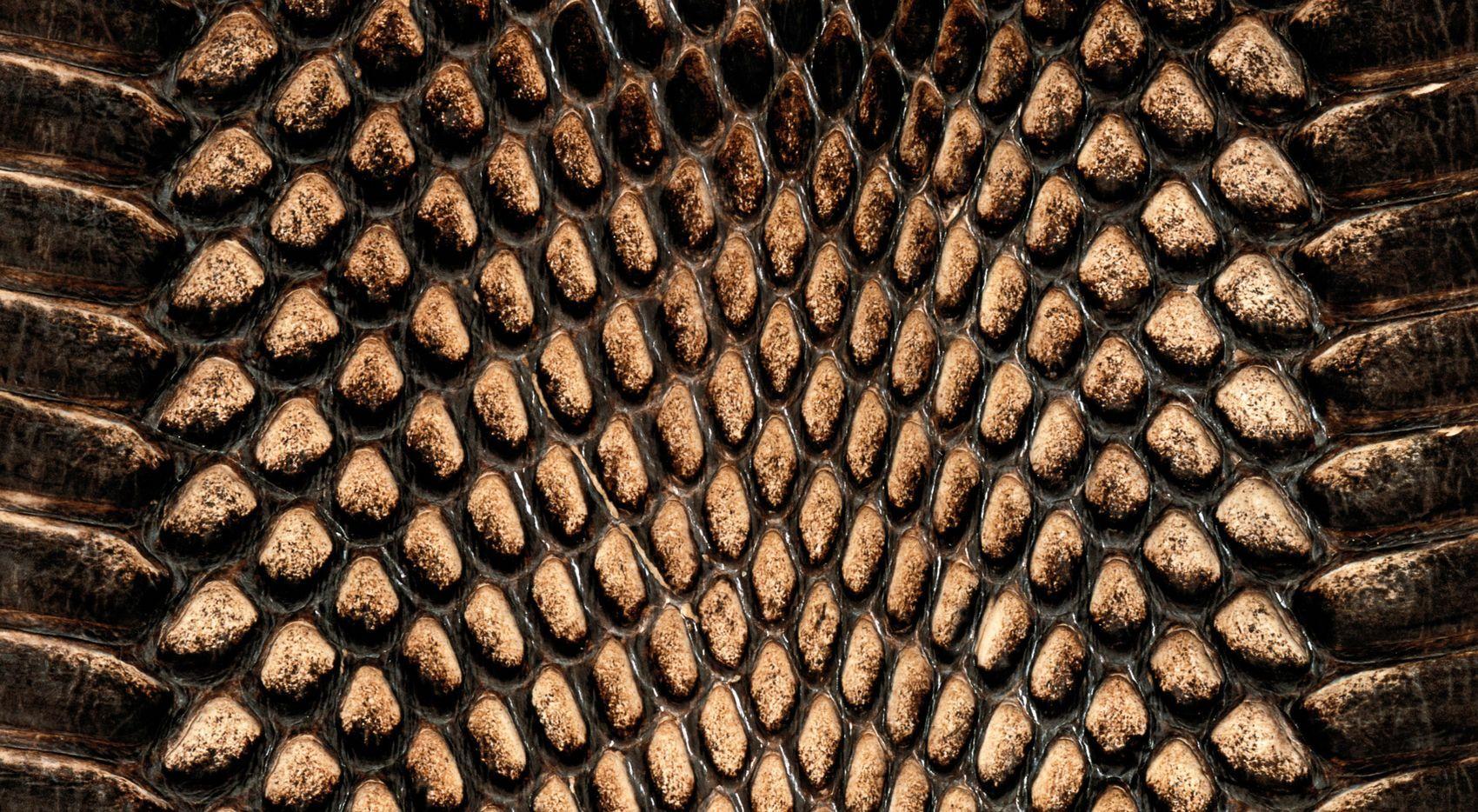 animal print wallpaper free download snakeskin