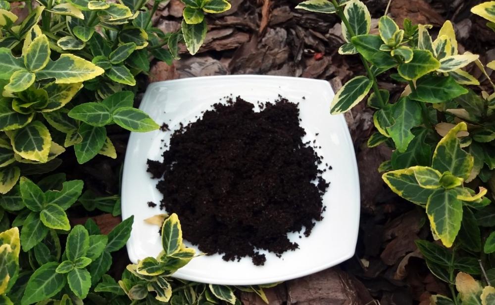 Fusy Z Kawy Dla Roslin Jak I Do Czego Je Stosowac A Na Co Uwazac E Ogrodek Garden Wall Garden Fruit