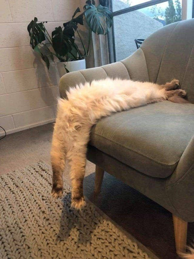 Liquid Cats Whose Bodies Can't Be Explained By Science