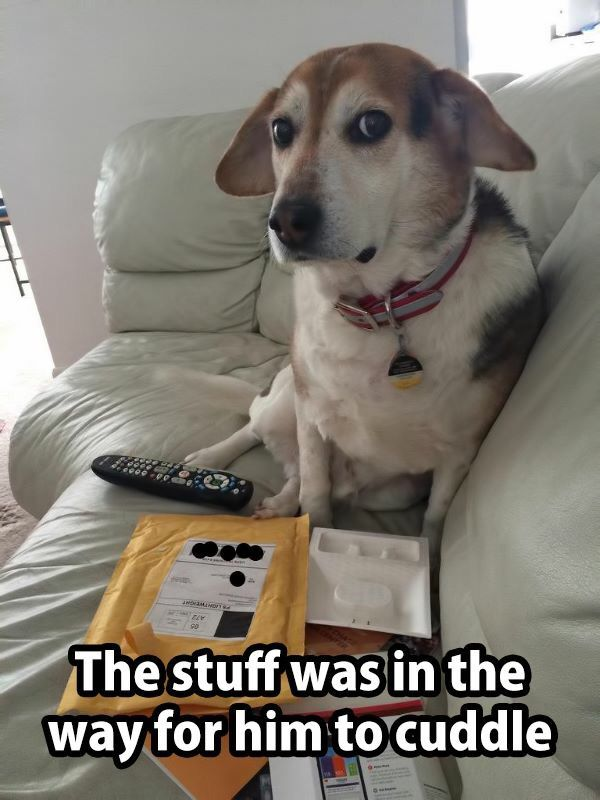 Never Let Stuff Get In The Way Of Cuddles Funny Animal Memes